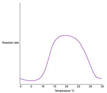 The Graph Above Shows The Progress Of An Enzyme Catalyzed