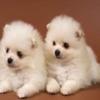 puppies1234