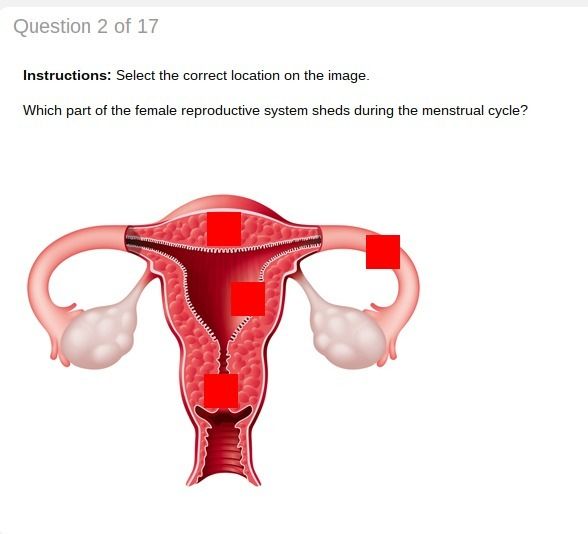 Which Part Of The Female Reproductive System Sheds During The