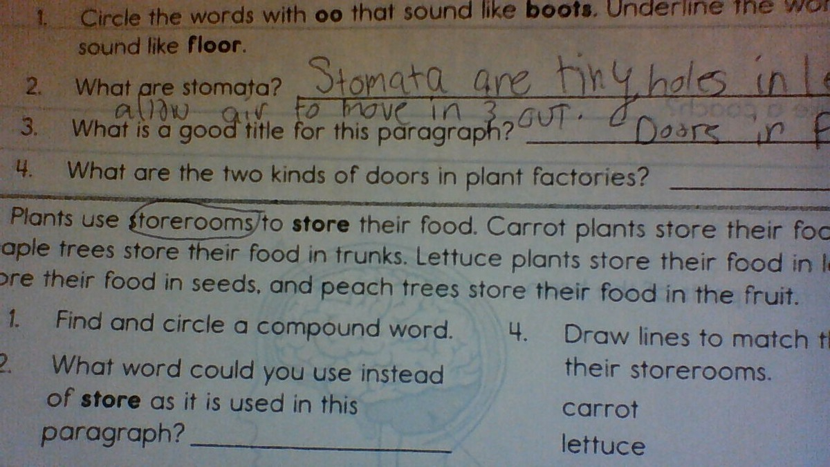 paragraph about plants