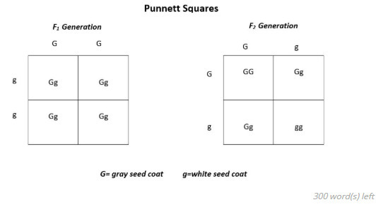 Superb Please Help Using The Punnett Square Diagrams Answer The Following Wiring Digital Resources Remcakbiperorg