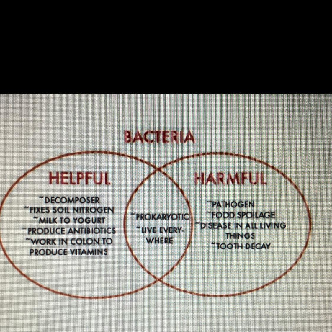 the venn diagram details some of the helpful and harmful effects of bacteria  in what ways are