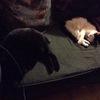 KittyCatAnimalLover
