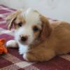 Puppylover05