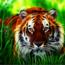 tigergirl