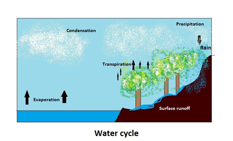 Draw A Diagram Of The Water Cycle Be Sure To Label The Following Steps Precipitation Condensation Brainly Com