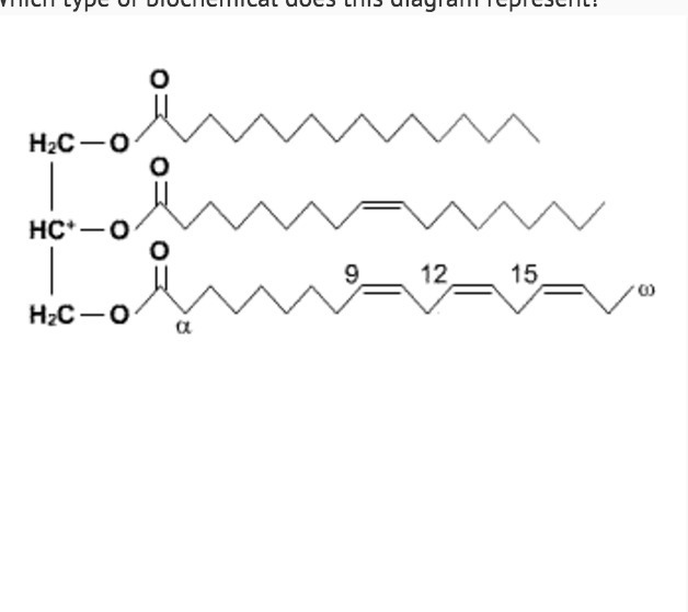 Which Type Of Biochemical Does This Diagram Represent Lipid Nucleic