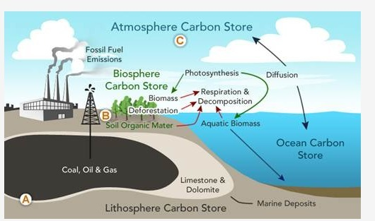 what is a carbon source