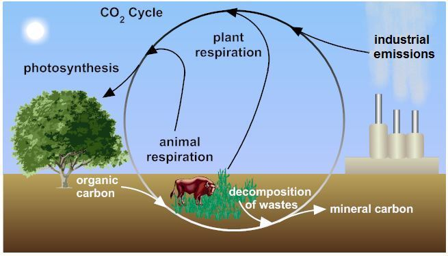 A Diagram Of The Carbon