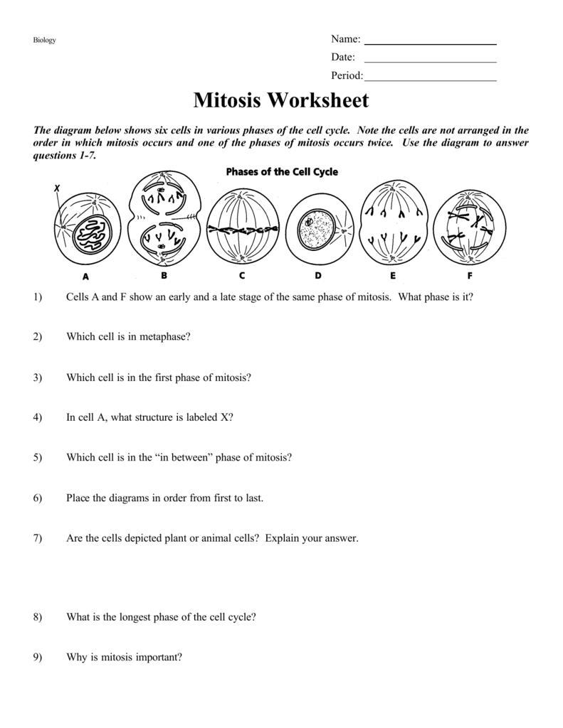 Mitosis Worksheet Help Brainly Com Mitosis sequencing worksheet answers