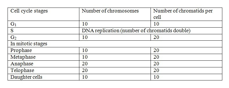Cell at metaphase of mitosis contains 20 sister chromatids ...