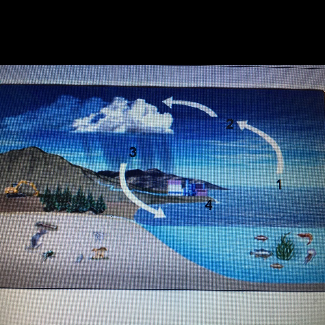 For This Question  Look At The Hydrologic Cycle Diagram