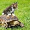 turtlemaster