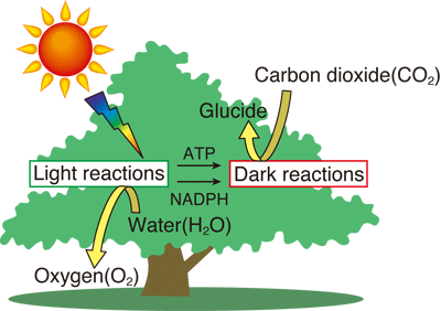 chemosynthesis is a process that takes place What is chemosynthesis   what is chemosynthesis  it's all about the process of converting carbon  chemosynthesis takes place in more common places,.