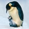 Pinguino24