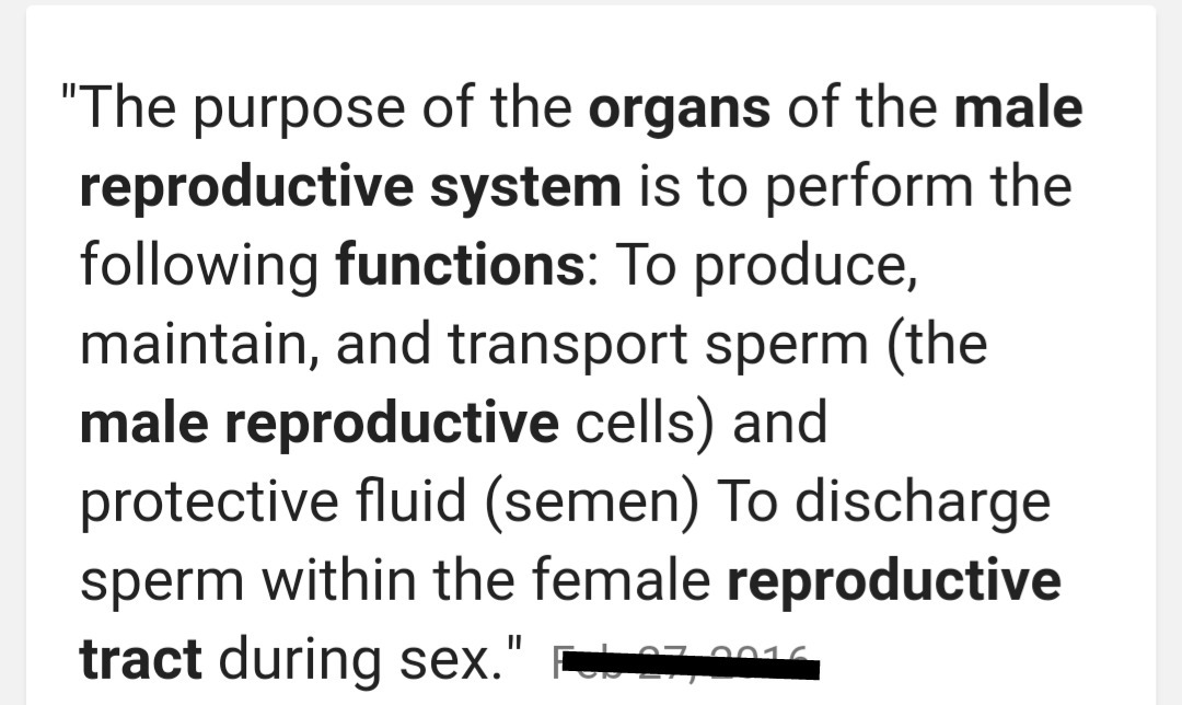 What Are The Primary Function Of The Male Reproductive System