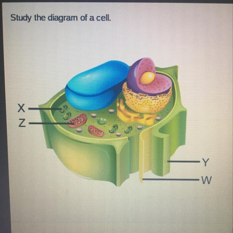 Study the diagram of a cell. Which structure is found only ...