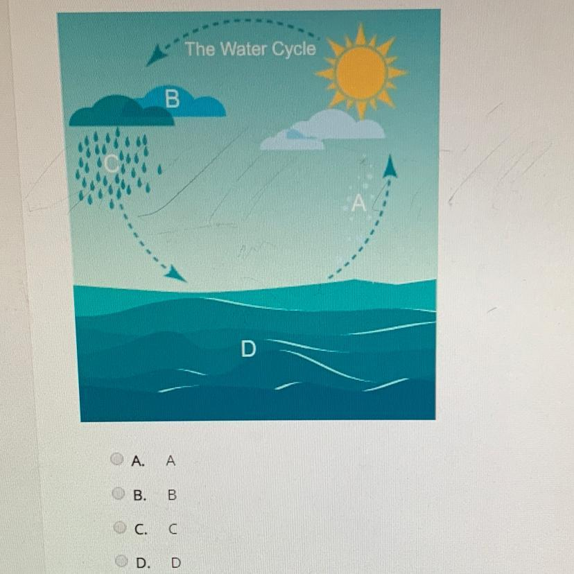 At Which Point Does Condensation Occur In This Water Cycle