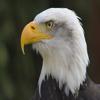 Eagles122