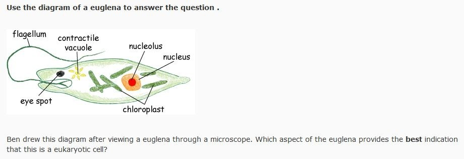 Ben Drew This Diagram After Viewing A Euglena Through A Microscope