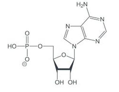 Write The Chemical Formula For A Molecule Of Non Cyclic Amp