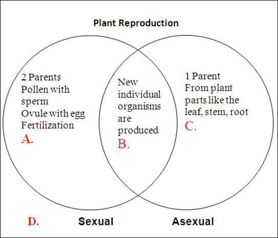 Comparing asexual and sexual reproduction chart