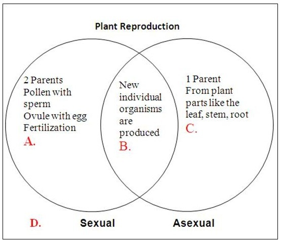 Comparison between sexual and asexual reproduction