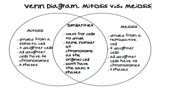 Mitosis And Meiosis Venn Diagram