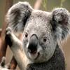 KoalaWoof12