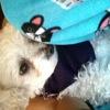 Daisy1270434