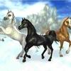 horsefan1