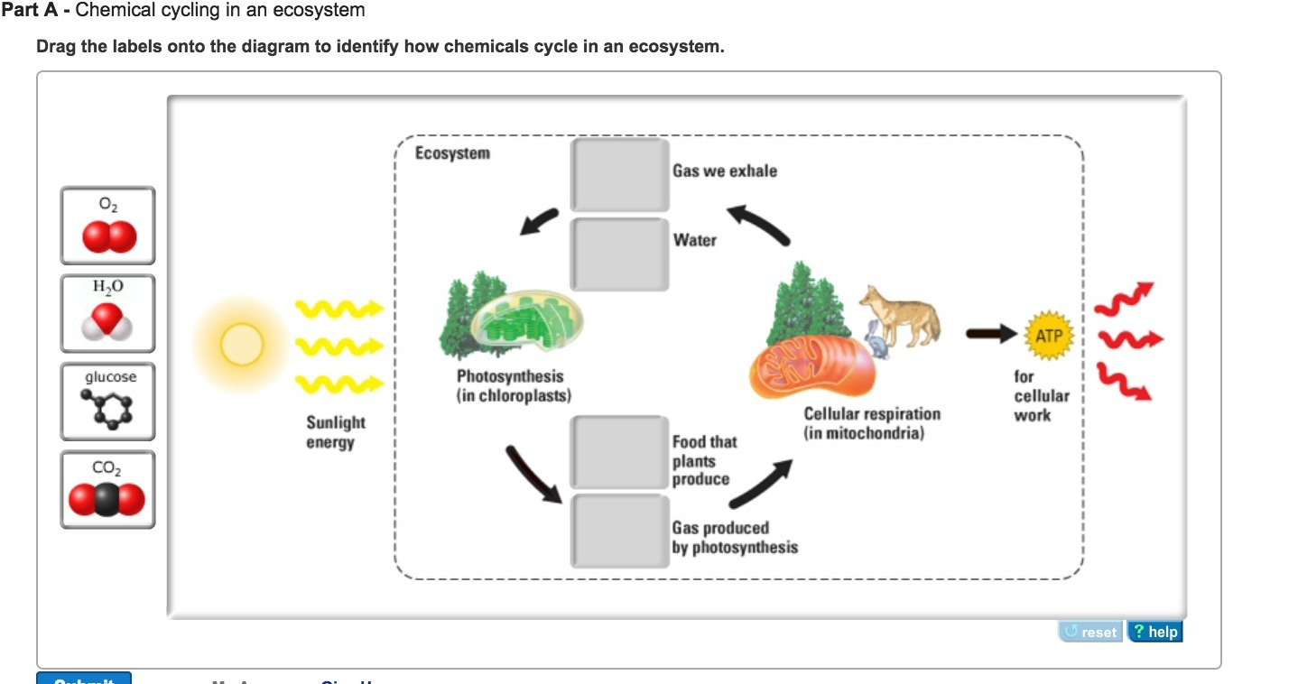 Drag the labels onto the diagram to identify how chemicals cycle download png pooptronica Image collections