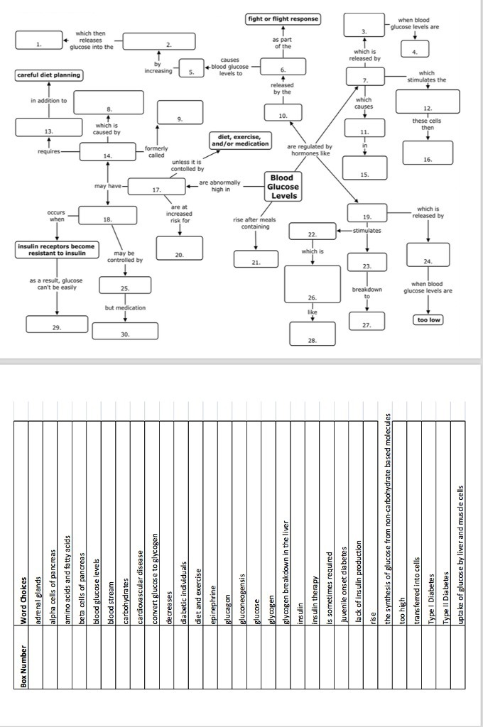 Blood Glucose Regulation Concept Map Activity Answers Brainly Com
