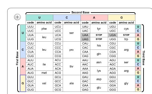 Use The Chart Below To Determine The Amino Acid Sequence Of The