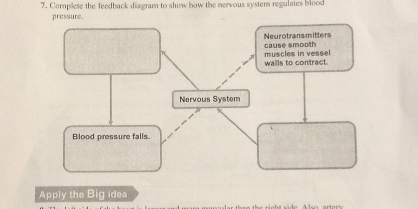 Complete The Feedback Diagram To Show How The Nervous System