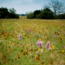 kathrynflowers02