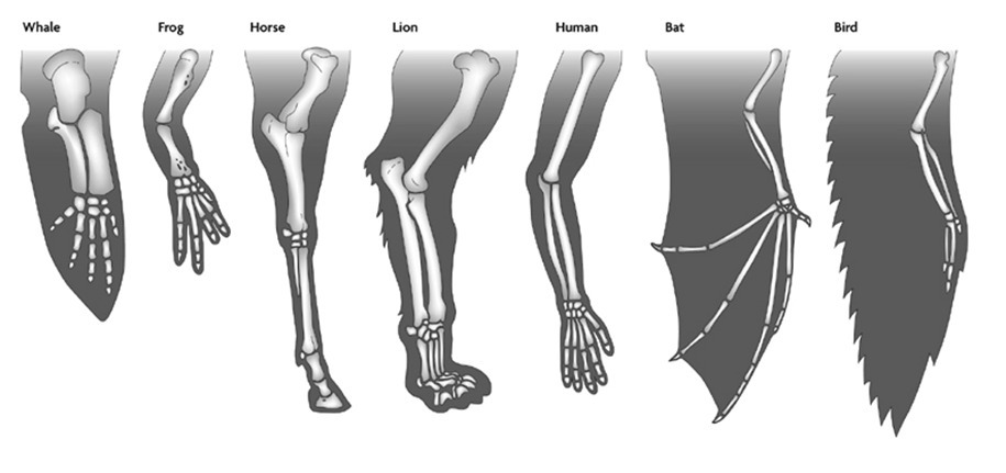 Which term describes body structures in different ...
