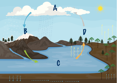 which part of the water cycle would follow step c in the diagram rh brainly com Printable Water Cycle Wheel Water Cycle Vocabulary