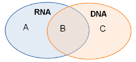 A venn diagram can be used to compare and contrast nucleic acids a venn diagram can be used to compare and contrast nucleic acids which characteristic would be correctly found in b contain ribose consist of two strands ccuart Choice Image