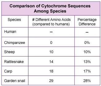 cytochrome c comparison Browse and read cytochrome c comparison lab cytochrome c comparison lab in this age of modern era, the use of internet must be maximized yeah, internet will help us very much not only for.